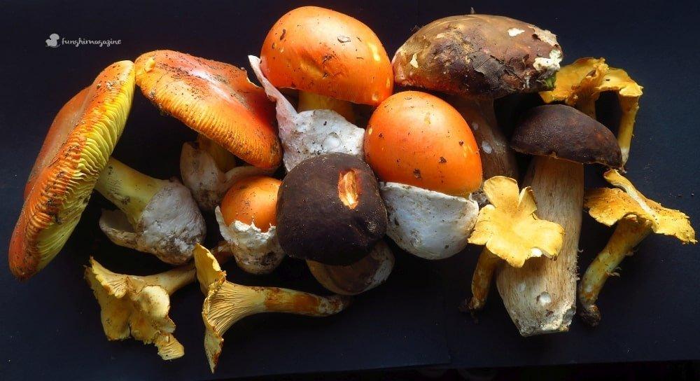 quadro funghi 2018 - funghimagazine
